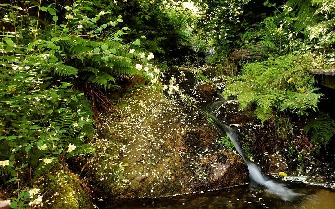 NATURA CONSCIENTE | FOREST MINDFULNESS
