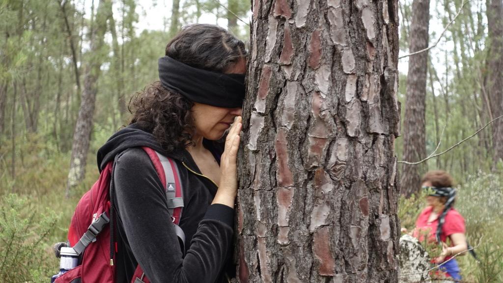 RECORRIDOS | FOREST MINDFULNESS 3 Febrero