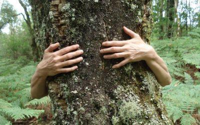 RECORRIDOS – FOREST MINDFULNESS 20 MAYO