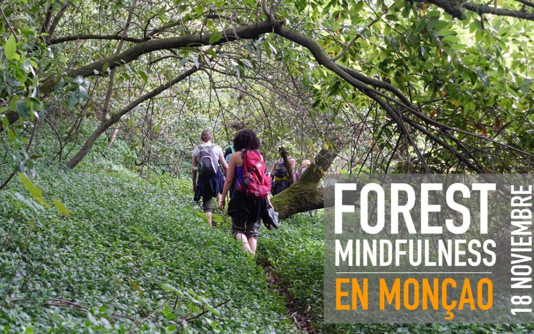 FOREST MINDFULNESS EN MONÇAO | 18 NOVIEMBRE