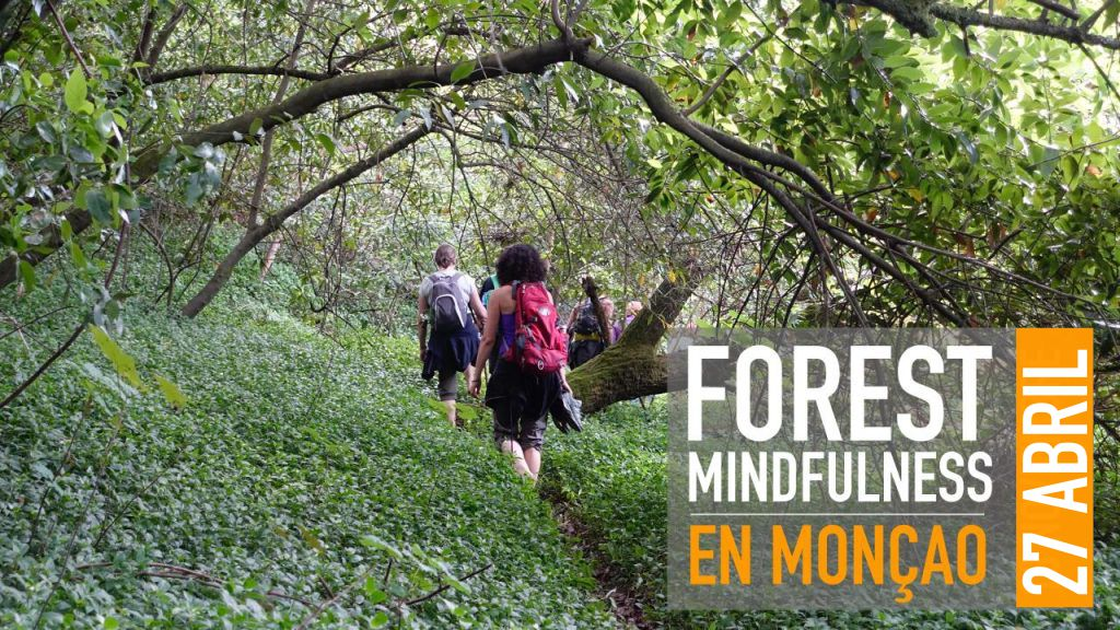 FOREST MINDFULNESS |  MONÇAO  27  ABRIL
