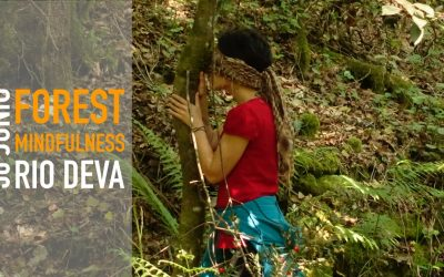 FOREST MINDFULNESS – RÍO DEVA 30 JUNIO