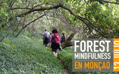 FOREST MINDFULNESS – MONCAO 13 JULIO