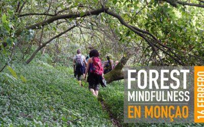 FOREST MINDFULNESS – EN MONÇÃO 16 FEBRERO